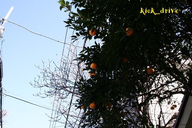 _MG_0032.jpg