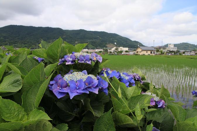 画像2013.05.01 905.JPG